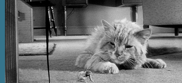 L'Homme qui rétrécit (The Incredible Shrinking Man)