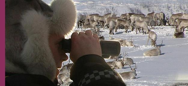 La Police des rennes