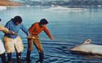 Les Balises d'Argos (3 films)